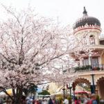 ディズニーランドにある桜の木、スイートハートカフェの前のお花見スポット